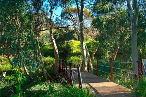 Rustic bridge with gum trees.
